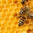 Macro of working bee on honeycells. — Stockfoto #15558923