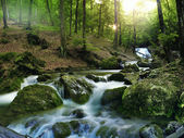 Forest waterfall — Stock fotografie