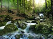 Orman şelale — Stok fotoğraf