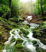 Cascata di foresta — Foto Stock