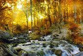 Jesień las potoku drzewami żółty — Zdjęcie stockowe