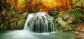Herbst Creek-Wald mit gelben Bäume — Stockfoto