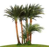 Palmy na białym tle — Zdjęcie stockowe