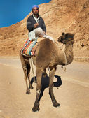 Bedouin on camel — Stock fotografie