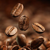 Closeup of coffee beans — Foto de Stock