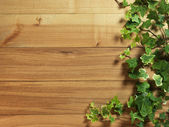 An Ivy plant on a table of hardwood — Stock Photo