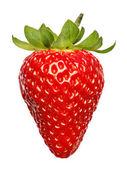 Rojo fresa aislado sobre fondo blanco — Foto de Stock