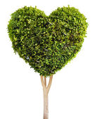 Heart shaped tree — Stockfoto