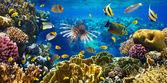 Korallen Kolonie und Korallenfische — Stockfoto