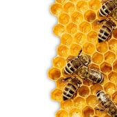 Makro arbeiten biene auf honeycells. — Stockfoto