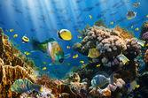 Koraal en vissen — Stockfoto