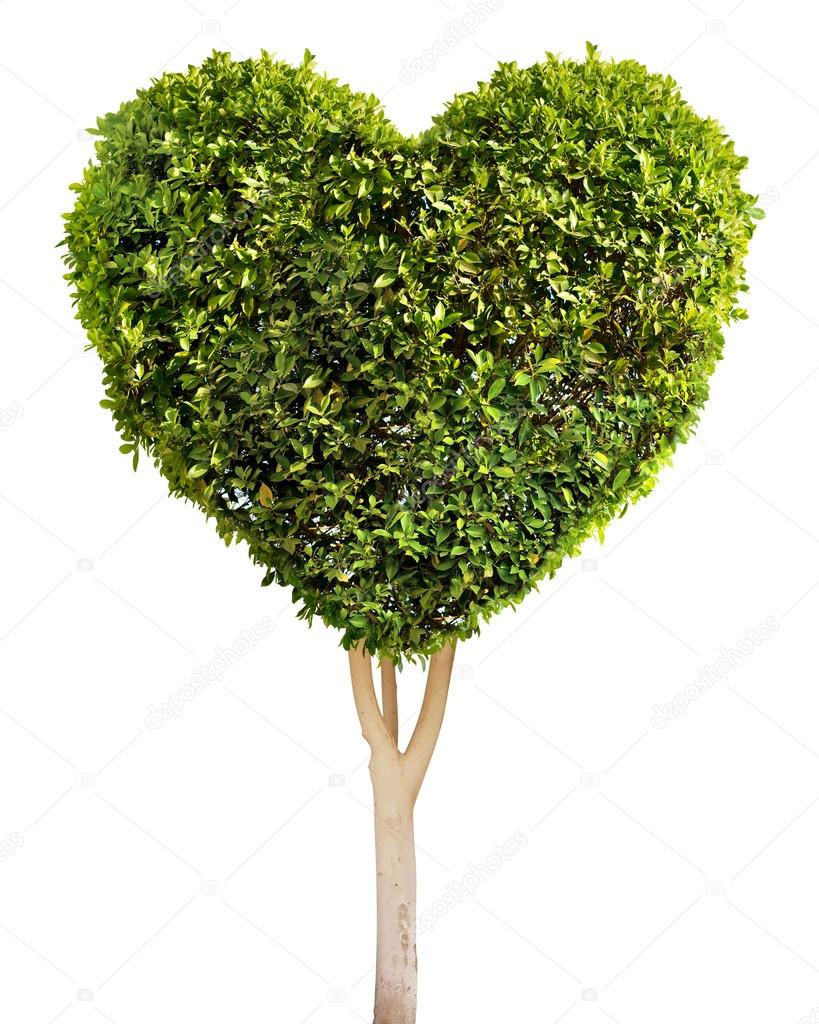 Heart shaped tree. Isolated on white. — Stock Photo #15557001