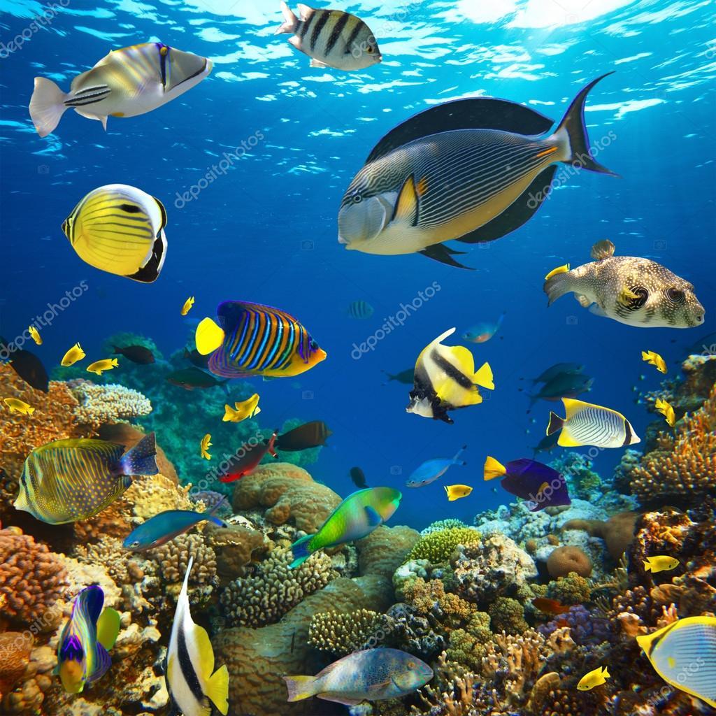 Фотообои Колония кораллов и коралловых рыб