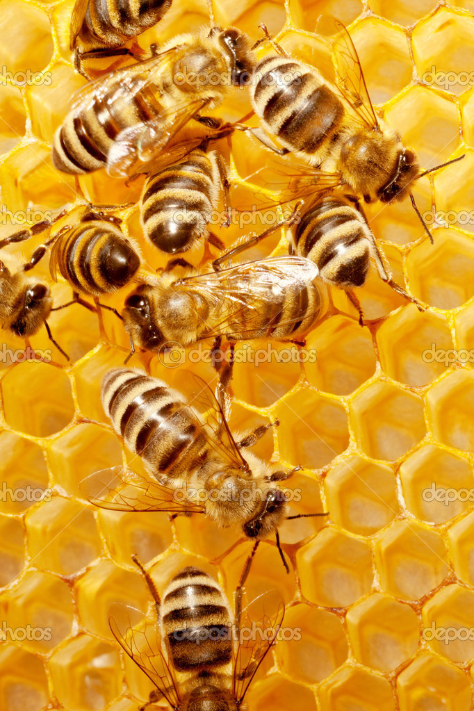 Close up view of the working bees on honeycells. — Stock Photo #15558833