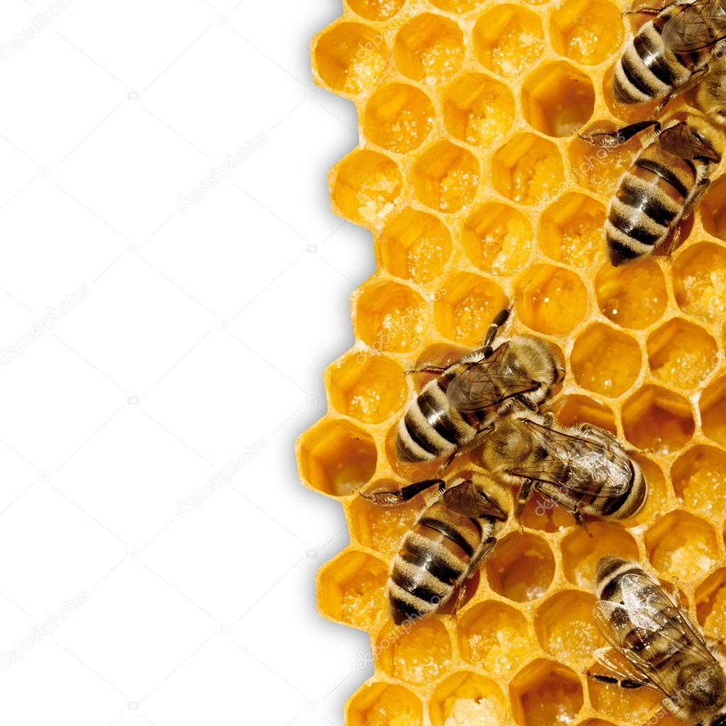 Close up view of the working bees on honeycells.  Foto de Stock   #15559051