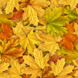 Leaves — Stock Photo #19147935