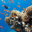 Coral and fish — Stock Photo #19148121