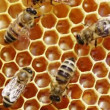 Close-up view of bees on honeycomb - 