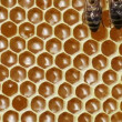 Stock Video: Close-up view of bees on honeycomb