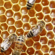 Close-up view of bees on honeycomb - Stock Photo