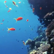 Royalty-Free Stock Obraz wektorowy: Coral and fish in the Red Sea.Egypt