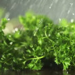 Parsley with knife on wooden cutting board. Macro with shallow dof. — Stock Video