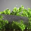 Stock Video: Fresh organic parsley with knife