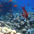 Coral and fish in the Red Sea.Egypt — Stock Video