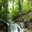 Forest waterfall — Stockfoto