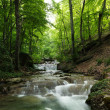 Forest waterfall — Stock Photo #30941587