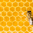 Macro of working bee on honeycells. — Foto Stock