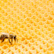 Macro of working bee on honeycells. — Stock Photo #32520469