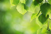 Green leaves background — Stock fotografie