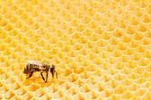 Makro pracovní Bee na honeycells. — Stock fotografie