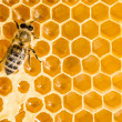 Macro of working bee on honeycells. — Stockfoto #34848691