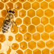 Стоковое фото: Macro of working bee on honeycells.