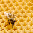 Macro of working bee on honeycells. — Foto de stock #34848695