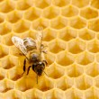 Foto Stock: Macro of working bee on honeycells.