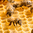 Macro of working bee on honeycells. — Stockfoto