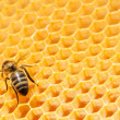 Macro of working bee on honeycells. — Stok fotoğraf