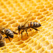Macro of working bee on honeycells. — Stock Photo #34848705