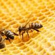 makro pracovní Bee na honeycells — Stock fotografie