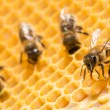 Stock Photo: Macro of working bee on honeycells.