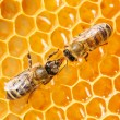 图库照片: Macro of working bee on honeycells.