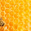 Photo: Macro of working bee on honeycells.