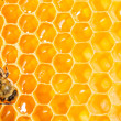 Macro of working bee on honeycells. — Zdjęcie stockowe #34848727