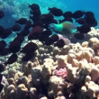 Coral and fish in the Red Sea, Egypt — Stock Video #34850671