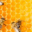 Macro of working bee on honeycells. — Stock fotografie
