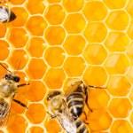 macro de abelha na honeycells — Foto Stock
