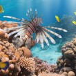 Coral and fish — Stock Photo #35582779